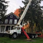Tree Removal Services Morris County New Jersey