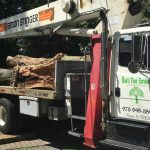 Tree_Removal_NJ_5